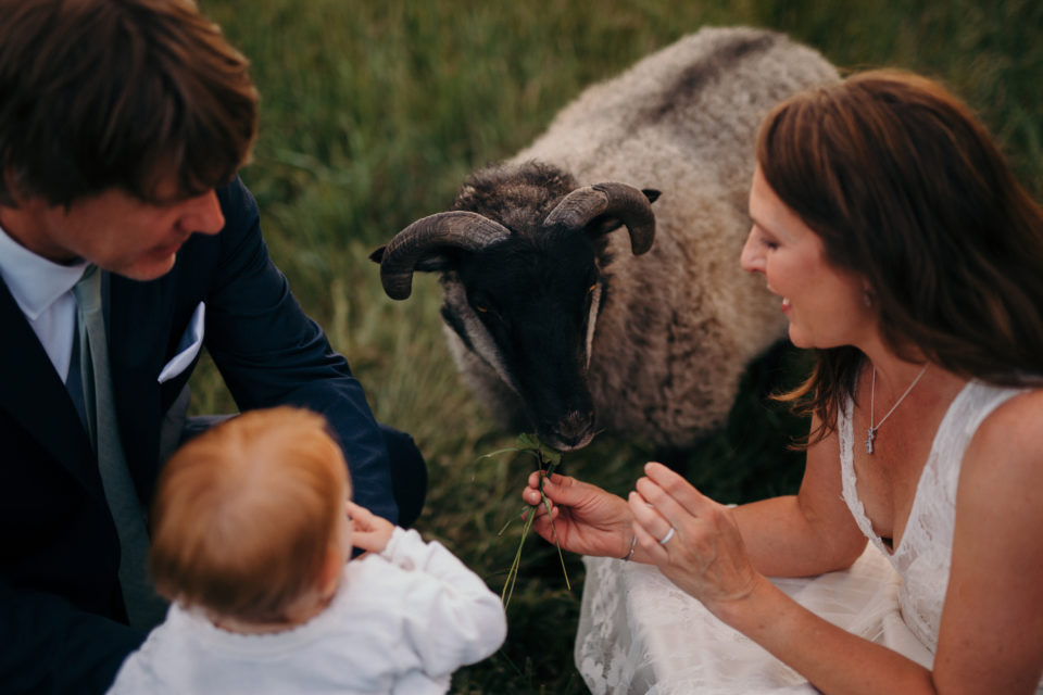 just married family feeding goats colorado summer wedding
