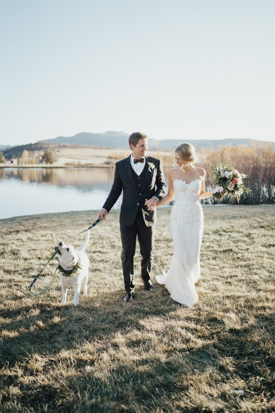 labrador retriever wedding dog bride groom